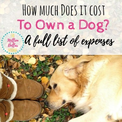 How much does a dog cost every year | List of pet expenses