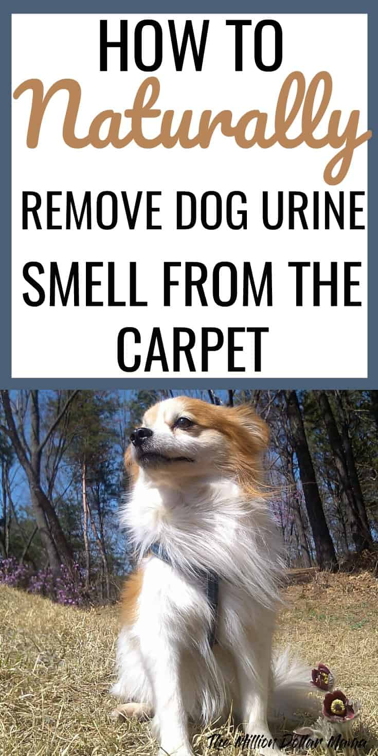 Natural Way To Get Dog Urine Smell Out Of Carpet Carpet