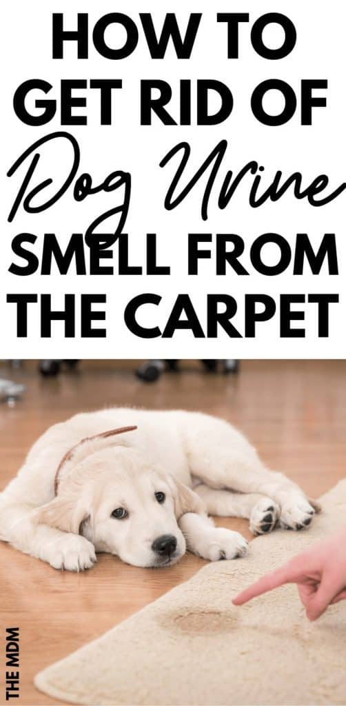How to Get Dog Pee Smell Out of the Carpet - This Homemade Odor Remover Works a Charm #dogurinesmell #odoreliminator