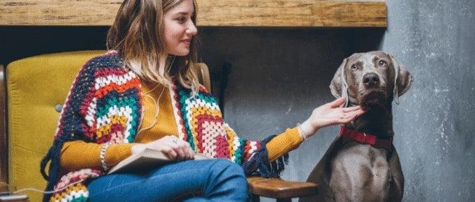 woman pet sitting great dane