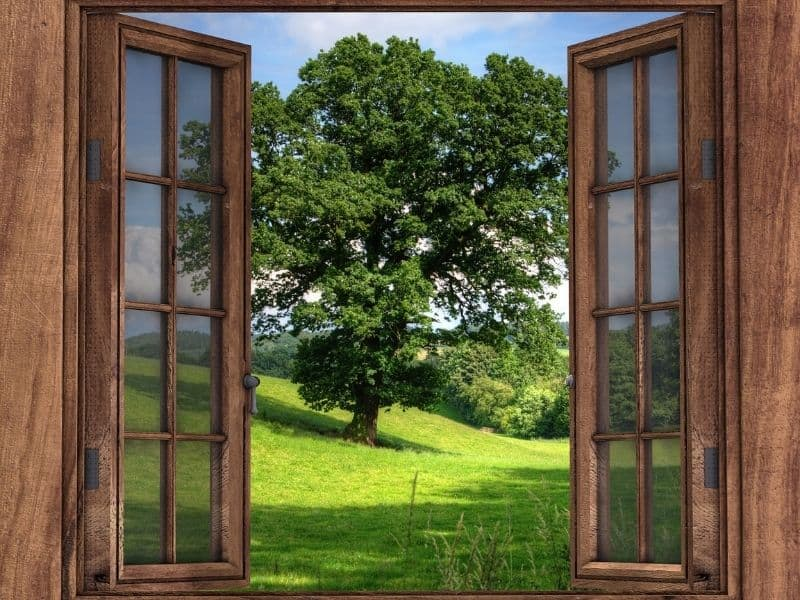 2 wooden windows opened up a a tree and grass outside