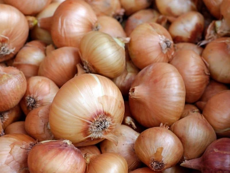 a pile of whole unpeeled onions