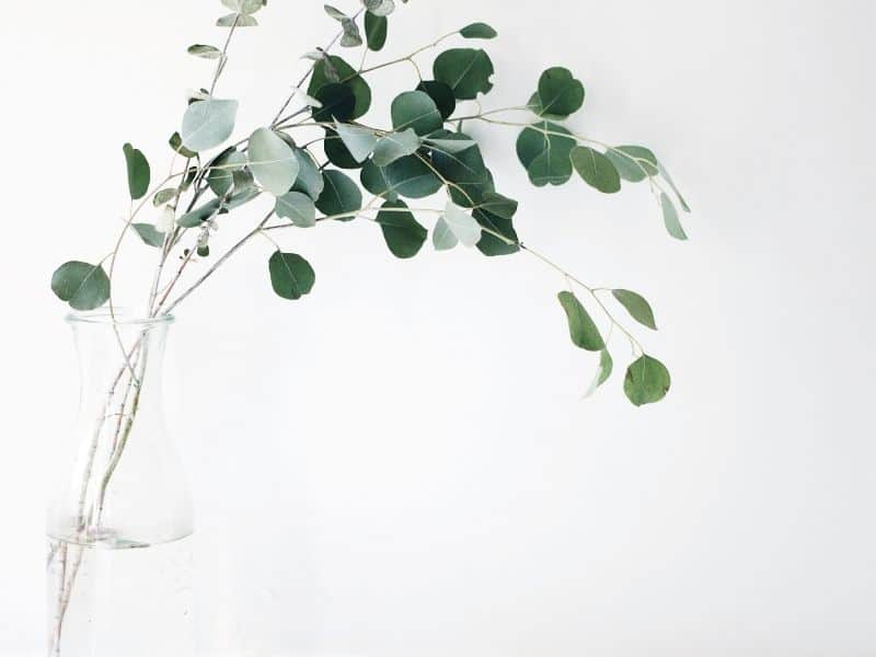 a plant in a vase against a white background