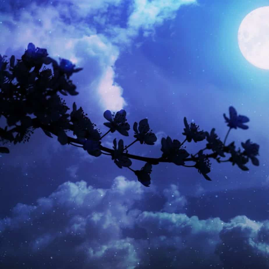 blue sky with a moon and a outline of a tree branch