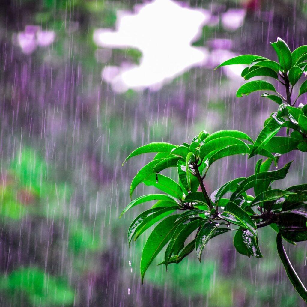 rain falling on a green plant