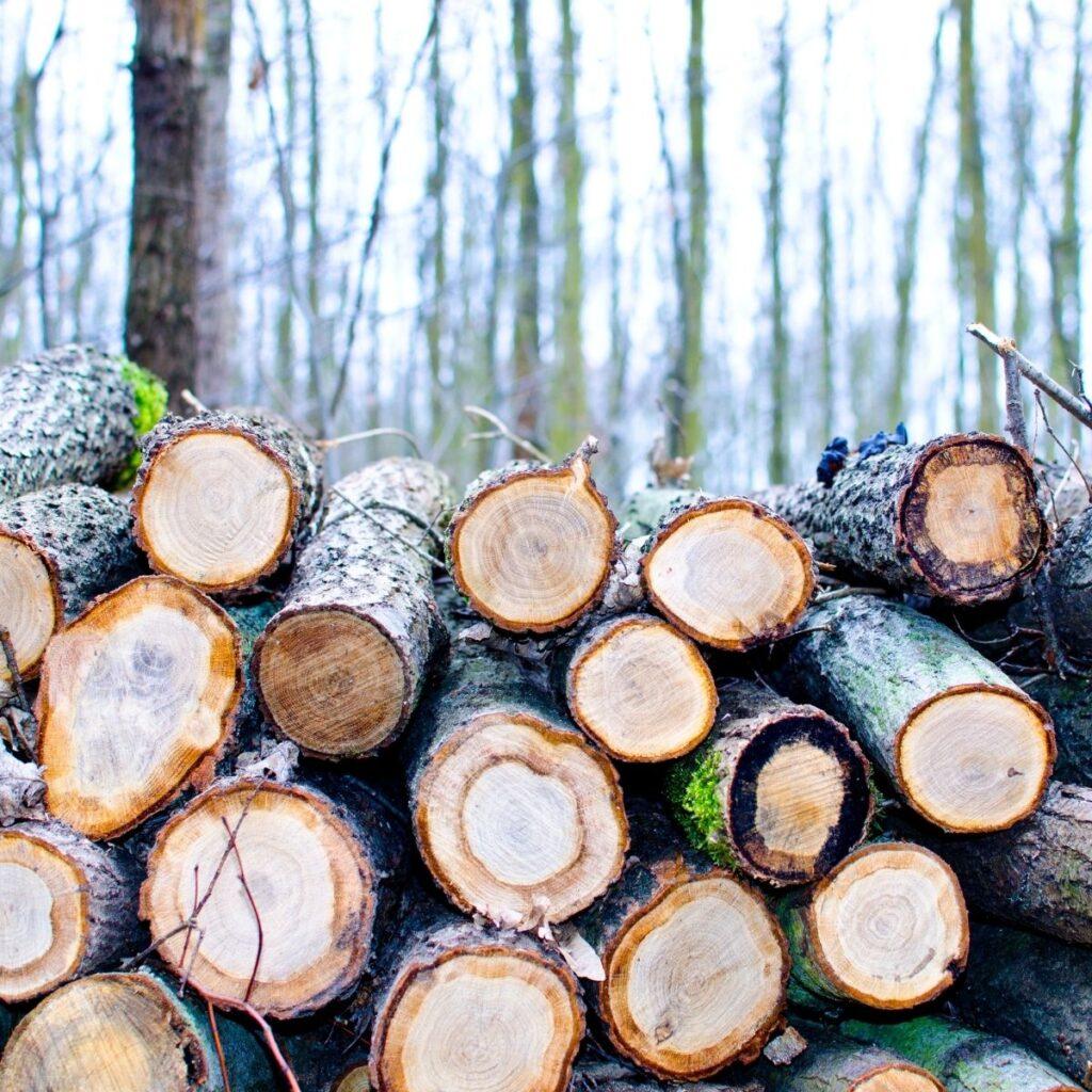 piles of cut timber