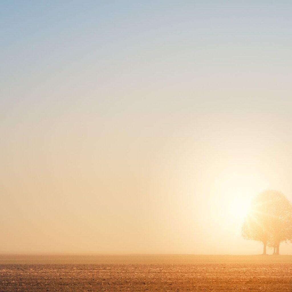 sun setting behind a lone tree