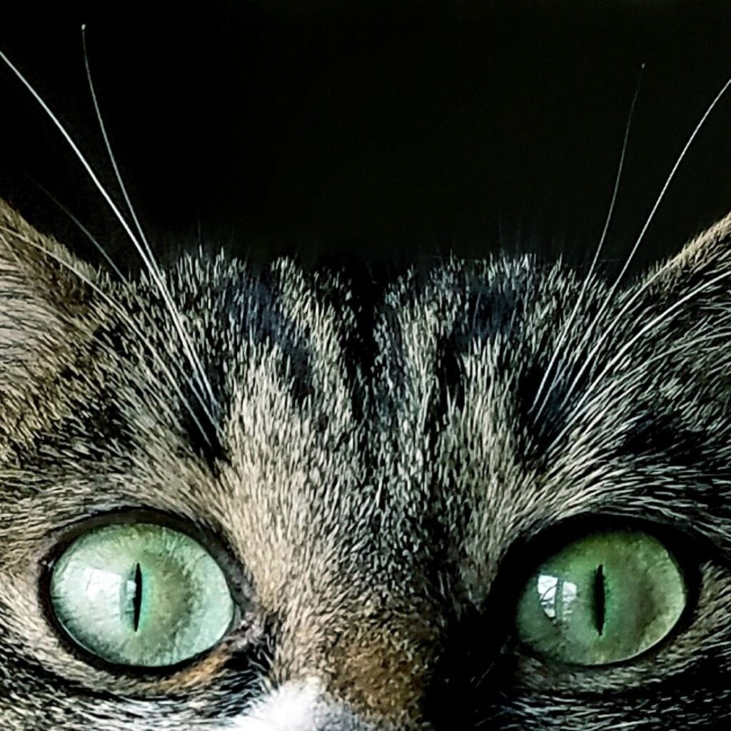 a cat peering over an edge with green eyes